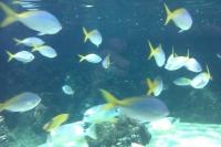 Lotsa Fish